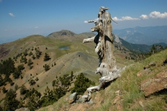 Υποαλπικά λιβάδια στα μεγάλα υψόμετρα του Σμόλικα - ΧΑΡΗΤΑΚΗΣ ΠΑΠΑΙΩΑΝΝΟΥ/ HARITAKIS PAPAIOANNOU