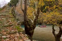 Βοϊδομάτης - Βαλκανικό αγριόγιδο (Rupicapra ruipicapra) -ΧΑΡΗΤΑΚΗΣ ΠΑΠΑΙΩΑΝΝΟΥ/ HARITAKIS PAPAIOANNOU