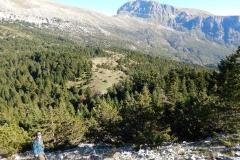 Το δάσος με τους ορεινούς αρκεύθους και τα έλατα στην κορυφή Κούλα (1526μ). Στο βάθος η Αστράκα - ΧΑΡΗΤΑΚΗΣ ΠΑΠΑΙΩΑΝΝΟΥ/ HARITAKIS PAPAIOANNOU